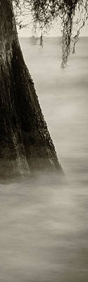 Photograph - Foggy Cypress Triptych 2 - Right Panel by Andy Crawford