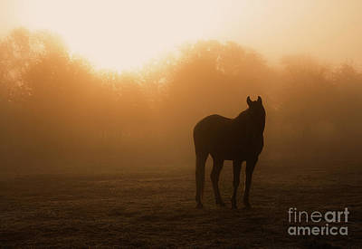 Photograph - Foggy Dawn by Sari ONeal