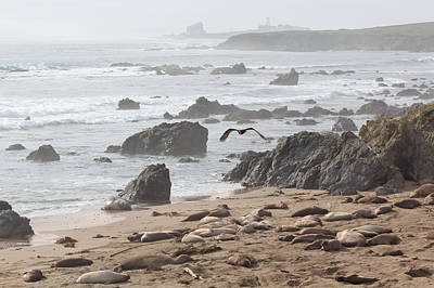 Photograph - Foggy Day At Piedras Blancas by Susan Rissi Tregoning