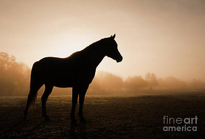 Photograph - Foggy Daybreak by Sari ONeal