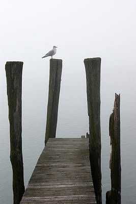 Photograph - Foggy Dock With Gull 51 by Mary Bedy