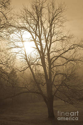 Photograph - Foggy Fall Morning by Glenn Gordon