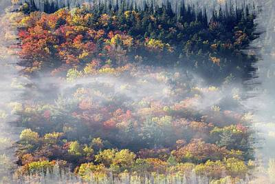 Photograph - Foggy Fall by Sherman Perry