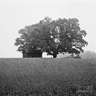 Photograph - Foggy Farm by Patrick M Lynch