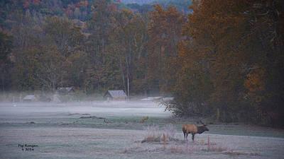 Photograph - Foggy Farm by Peg Runyan