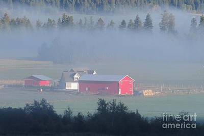 Photograph - Foggy Farmyard by Frank Townsley