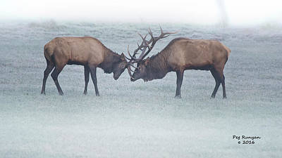 Photograph - Foggy Fight by Peg Runyan