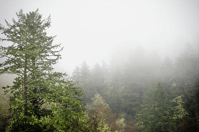 Photograph - Foggy Forest by Anthony Doudt