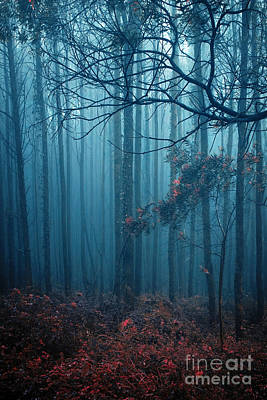 Forest Light Photograph - Foggy Forest by Carlos Caetano