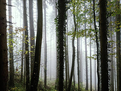 Photograph - Foggy Forest by Chevy Fleet