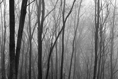 Photograph - Foggy Forest by Kathy Stanczak