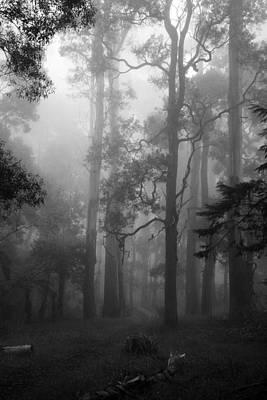 Foggy Forest Art Print by Lois Romer