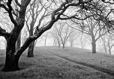 Diablo Photograph - Foggy Forest On Mt. Diablo by Cathy Clark aka CLCsPics