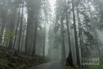 Photograph - Foggy Forest Pathway by Peggy Hughes