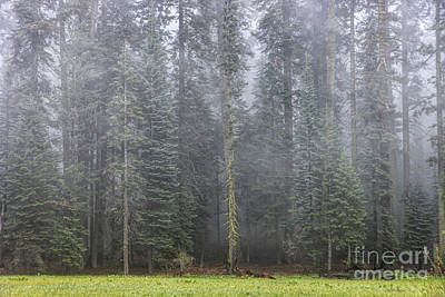 Photograph - Foggy Forest by Peggy Hughes