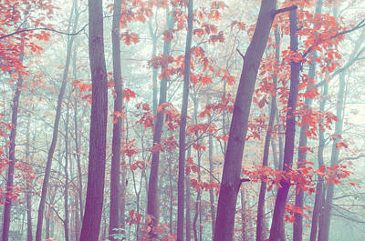Photograph - Foggy Forest. Splashes Of Colors  by Jenny Rainbow
