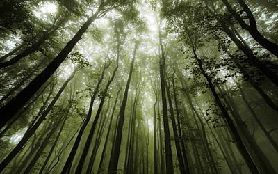 Photograph - Foggy Forest of Shenandoah by Vladimir Grablev