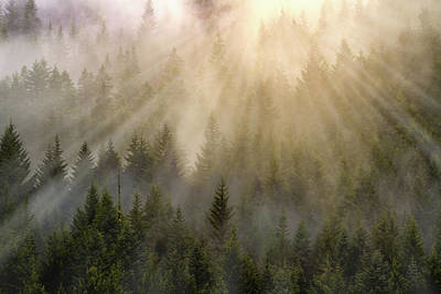 Photograph - Foggy Forest by William Lee