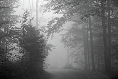Switzerland Photograph - Foggy Forest by Yago Veith