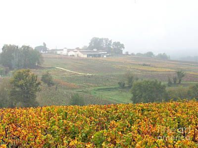 Photograph - Foggy French Vineyard by Barbara Plattenburg