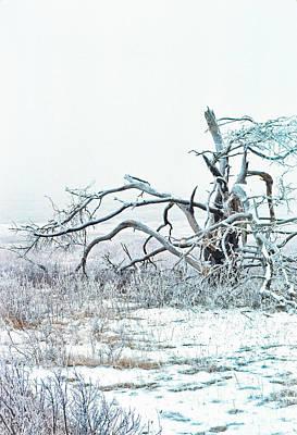 Big Meadows Photograph - Foggy Frosty Morning Big Meadows by Thomas R Fletcher