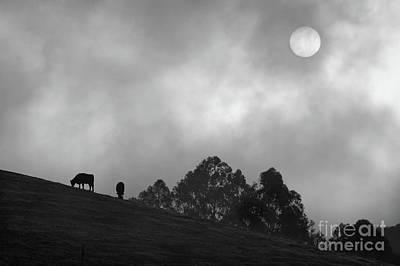 Foggy Grazing Half Moon Bay California Original by Gus McCrea