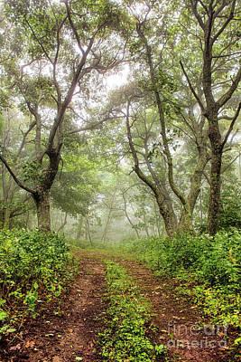 Photograph - Foggy Hiking Trail In The Blue Ridge by Dan Carmichael