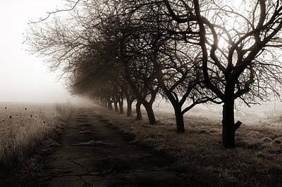 Photograph - Foggy Lane by Dick Pratt