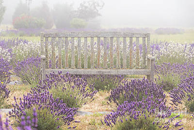 Photograph - Foggy Lavender Chair by Louise Magno