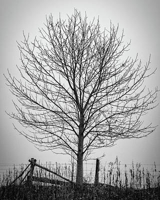 Foggy Lone Tree Hill Fine Art Art Print