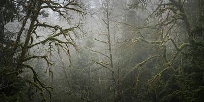 Photograph - Foggy Maples by Adam Gibbs
