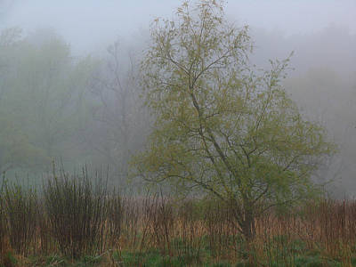 Photograph - Foggy Marsh by Juergen Roth