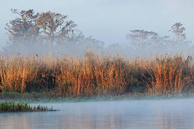 Photograph - Foggy Morning At Black Hammock Wilderness Area by Stefan Mazzola