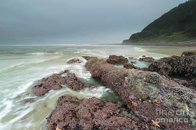 Sea Creatures Photograph - Foggy Morning At Neptune Beach, Oregon by Masako Metz