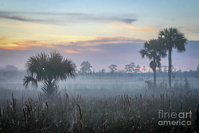Photograph - Foggy Morning At Pine Glades by Tom Claud