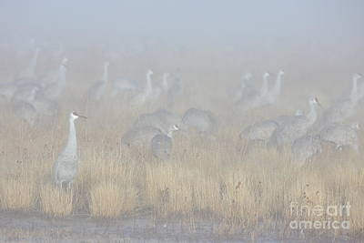 Photograph - Foggy Morning by Bryan Keil