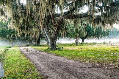 Photograph - Foggy Morning - Coosaw Plantation by Scott Hansen