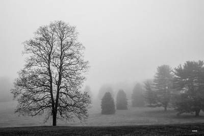 Photograph - Foggy Morning by Dana Sohr