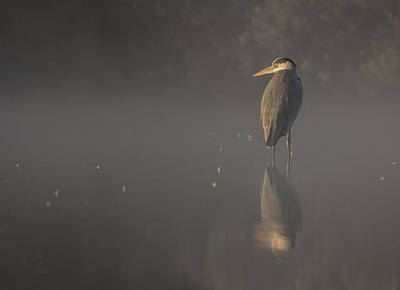 Photograph - Foggy Morning by David March