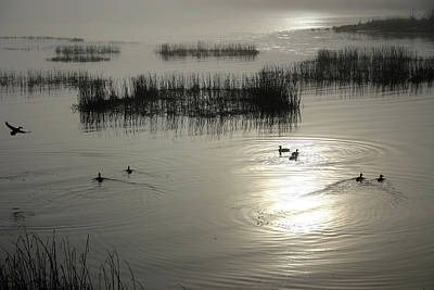 Photograph - Foggy Morning Ducks by Craig Strand