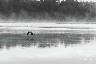 Photograph - Foggy Morning Flight Grayscale by Jennifer White