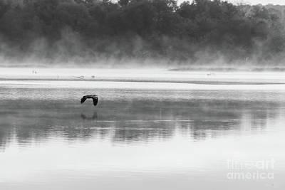 Photograph - Foggy Morning Flight Grayscale by Jennifer White