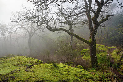 Photograph - Foggy Morning Forest by Keith Boone