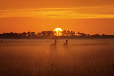 Photograph - Foggy Morning Horse Pasture Sunrise From Okeechobee Florida by Justin Kelefas