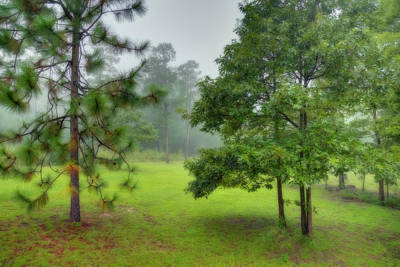 Photograph - Foggy Morning In Georgia by Kay Brewer