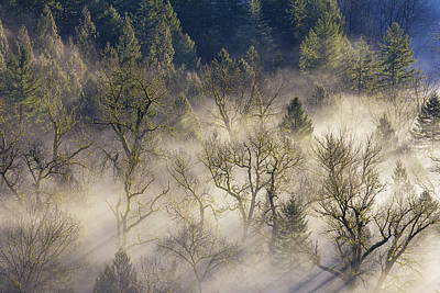 Foggy Morning In Sandy River Valley Art Print by David Gn
