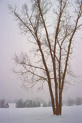 Bare Trees Mixed Media - Foggy Morning Landscape 13 by Steve Ohlsen