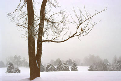 Foggy Morning Landscape 16 Art Print by Steve Ohlsen