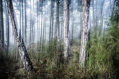 Foggy Morning Print by Marc Garrido