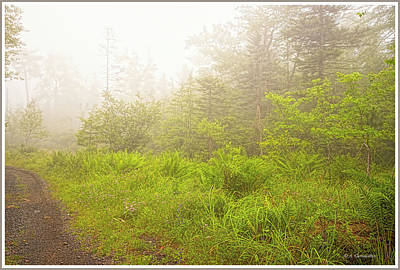 Photograph - Foggy Morning, Mountain Thicket, Pocono Mountains by A Gurmankin